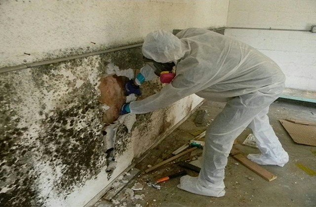 It Can Affect Wood And Cause Structural Damage To A Home Mold Is Common Part Of Everyday Life Since Be Found Relatively